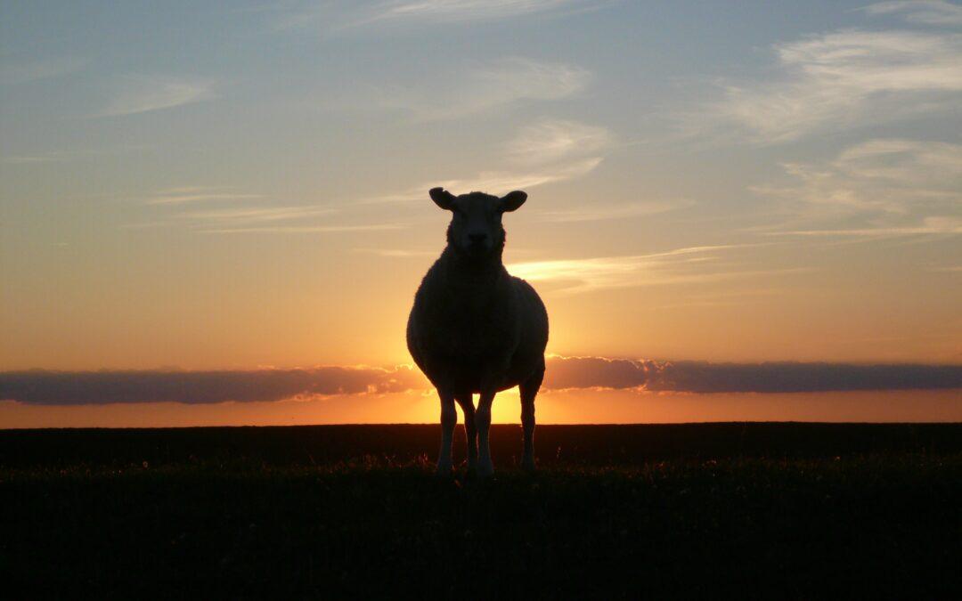 Bárány Parasa Ábrahám